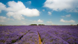 5 Instagram-Worthy Lavender Farms To Visit In Ireland And The Uk