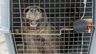 Two Orphaned Seal Pups Released Back Into Wild Off Co Wexford