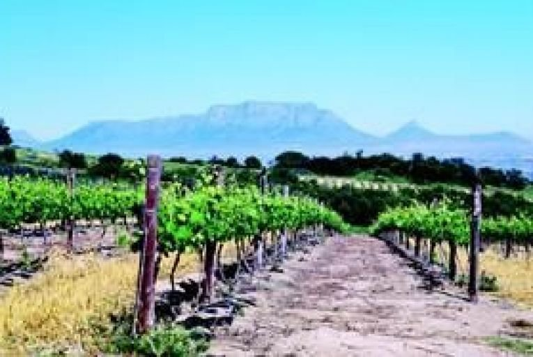 Wine: South Africa's wine redemption