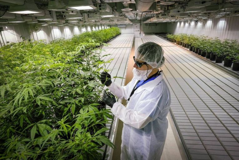 Two medical cannabis products approved for sale