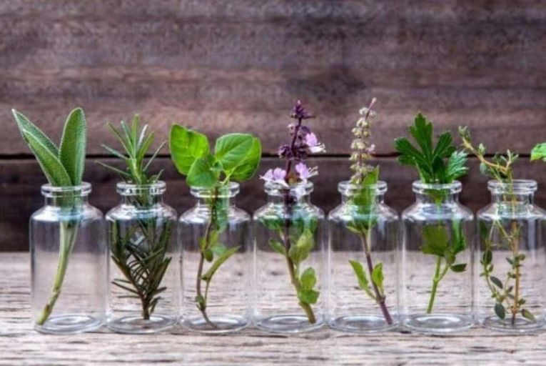 Creating plants from cuttings can be a rewarding exercise