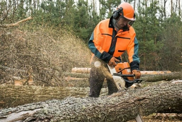 Logjam as forestry licence backlog leaves industry in crisis