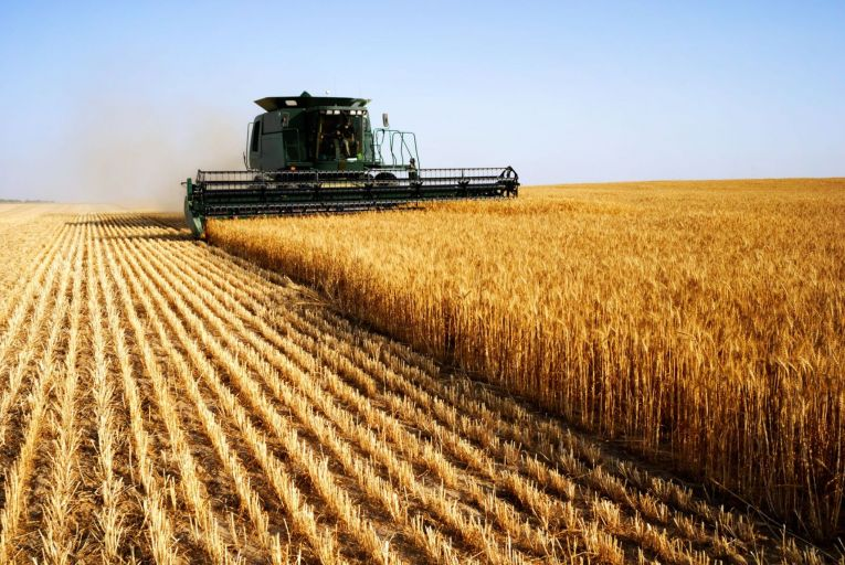 Some countries are stockpiling food such as wheat through export bans or accelerated imports