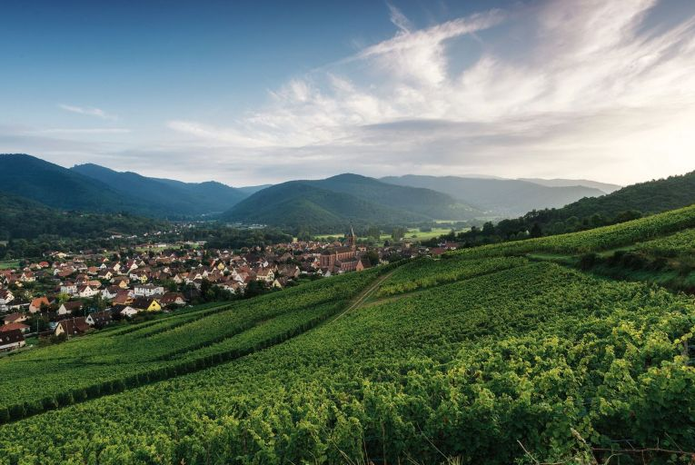 A vineyard in Alsace, near the village of Wihr-au-Val: the slate and granite soil give the region's wines their character