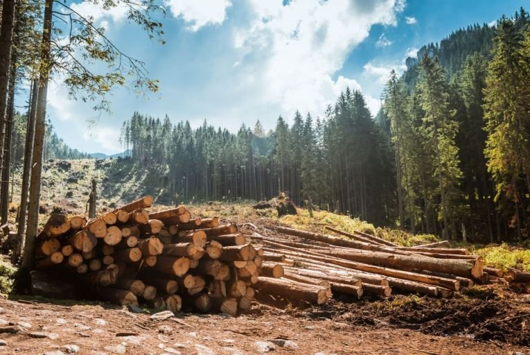 Representatives of the Irish timber industry say it is in crisis as felling licences are taking up to two years to come through, due to a large number of appeals. Picture: Getty