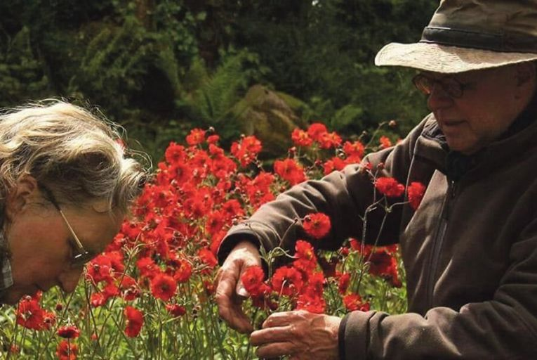 Elisabeth and Gert Stam with Geum 'Red Wings'
