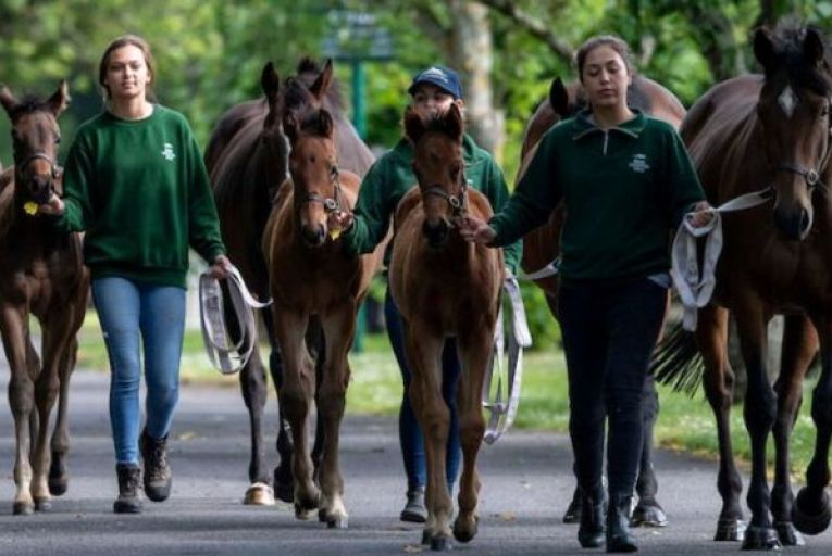 National Stud in Kildare: would form part of Fáilte Ireland's equine-themed tourist trail