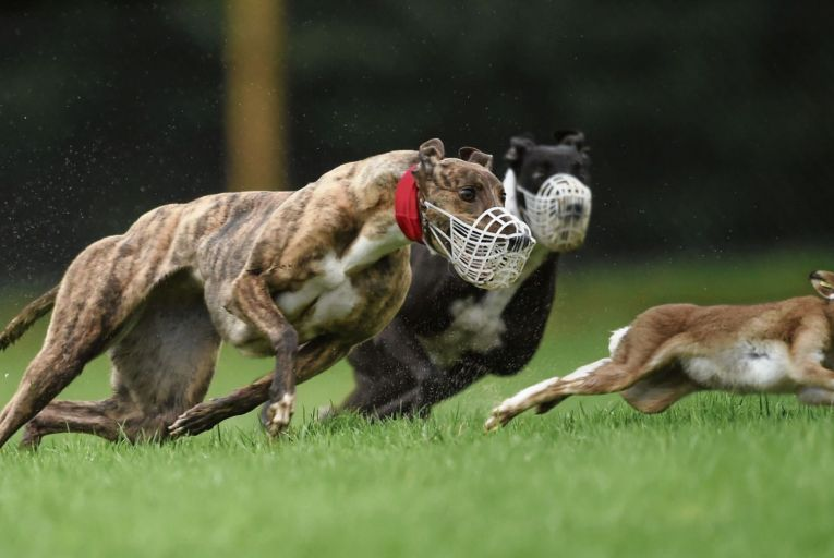 The Green Party had sought a ban on coursing in the programme for government, but were unable to get it included in the final document. Picture: Getty