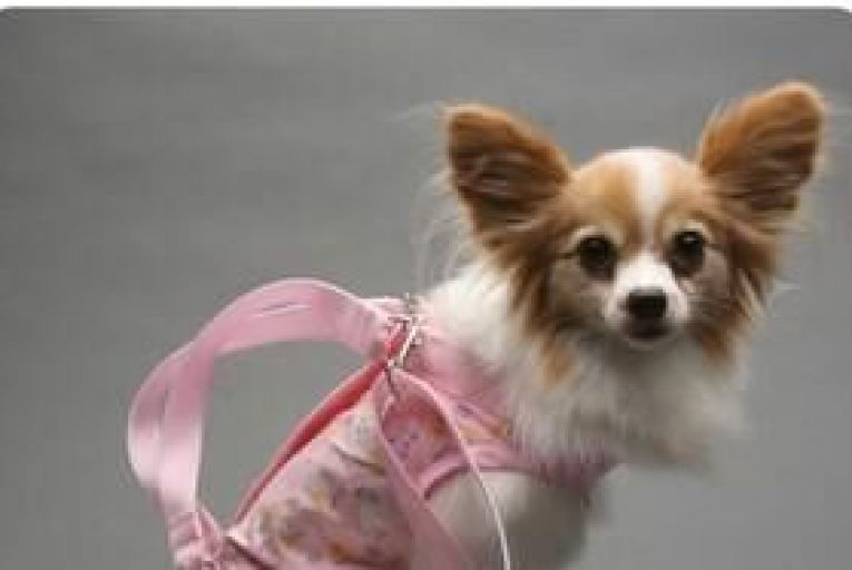 Valentine's Day spend on pets to hit $367 million