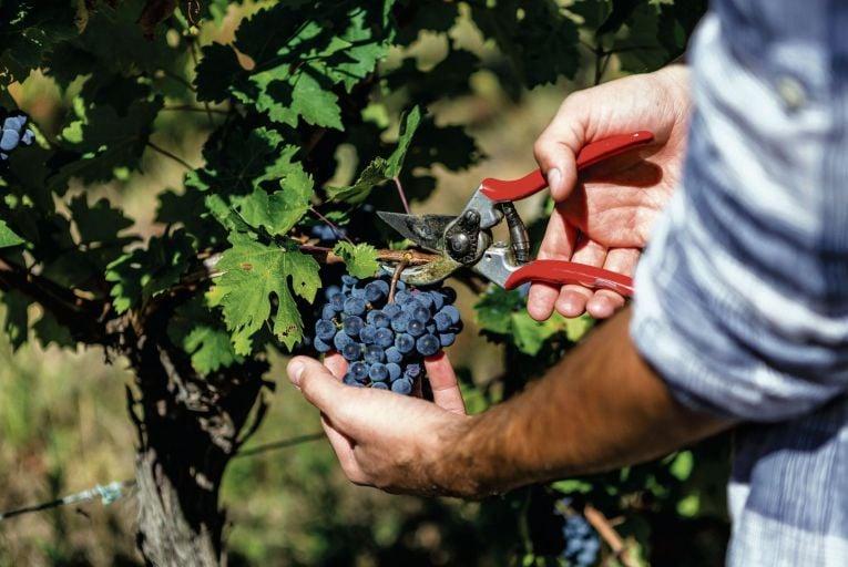 Wine: Northern Spain's fertile landscape