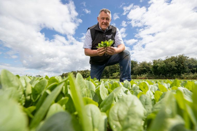 Stephen McCormack: 'I'm probably still too involved in the farming side of the business, but it's my first love. I live and breathe it.' Picture: Finbarr O'Rourke