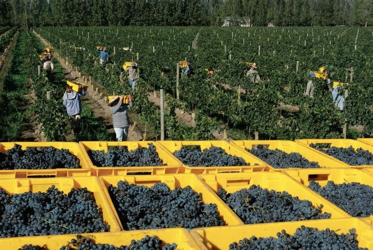 Malbec is becoming increasingly popular through its Argentinian varietals