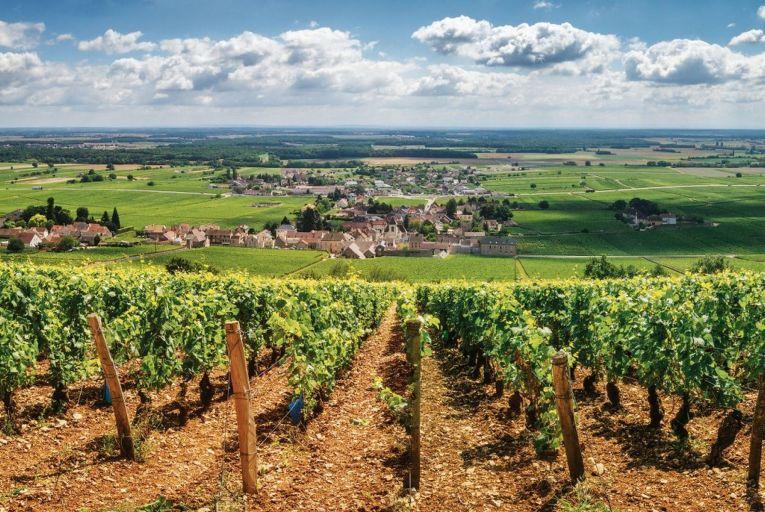 Wine: The big romance of the Burgundy region