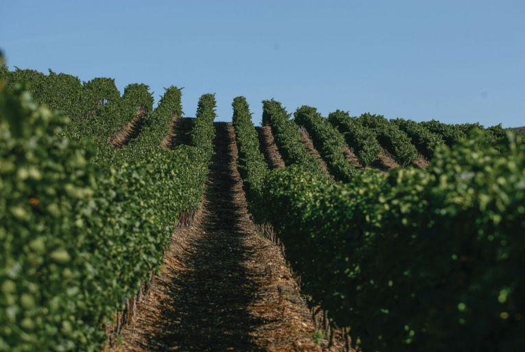 Wine: Cape of good hope