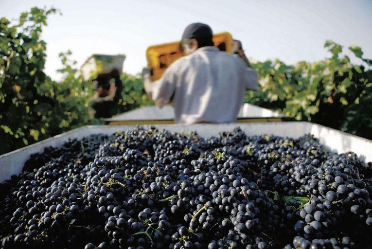 Wine: Grenache gives autumn heart