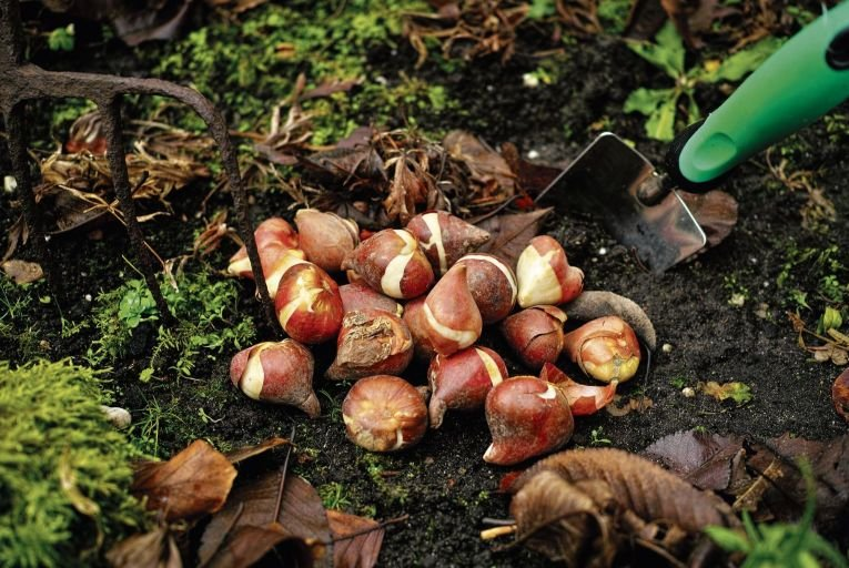Hidden potential: planting bulbs now can give you an uplifting display next spring