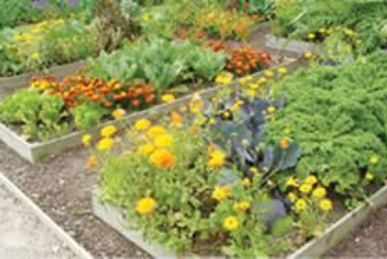 Companion planting is a great way to help your garden thrive.