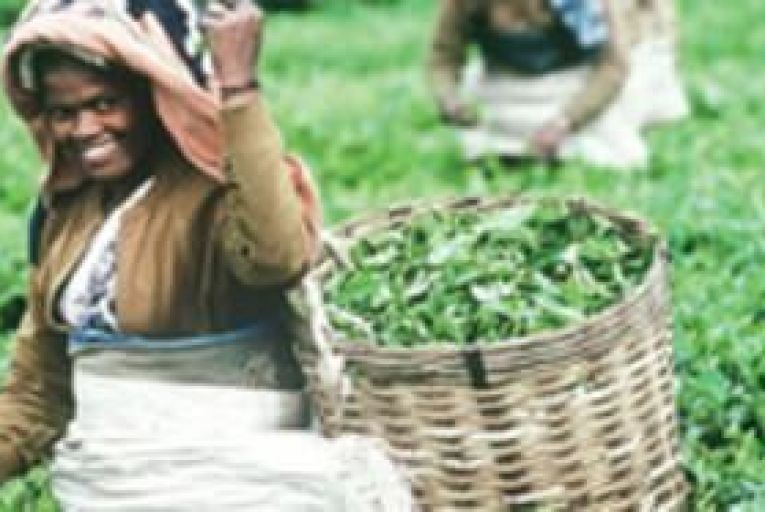 Fairtrade aims to lighten the load of Third World workers.