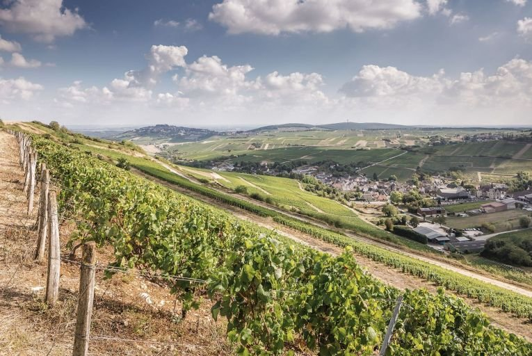The Loire Valley is the largest wine region in France