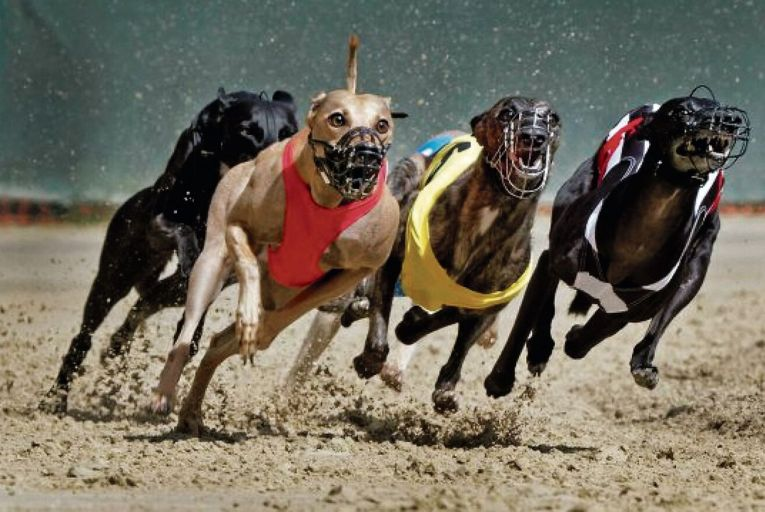 The Department of Agriculture's Horse and Greyhound Racing Fund has been split 80 per cent to horse racing and 20 per cent to greyhound racing since it was established in 200