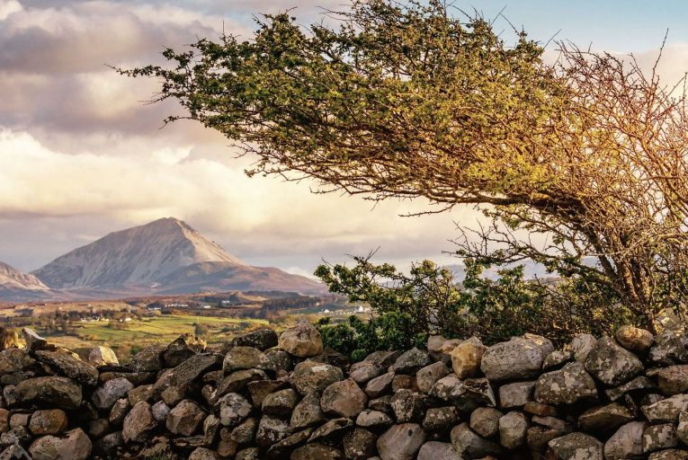 A wind-shaped hawthorn: autumn is one of the best times to visit Cluain na dTor, when a magical low sunlight ignites the planting