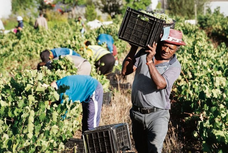 Wine: South Africa's wines for all seasons