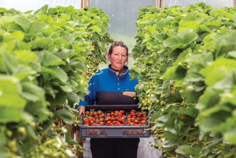 Growing a fruitful family business