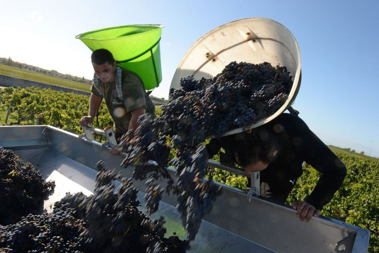 In 2020, wine producers will take radical action to counteract climate change