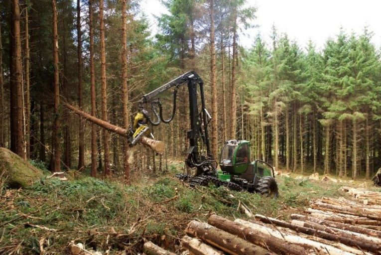 The department's forestry licence section has given permission for just 2,839 hectares of new tree planting up to the end of last month, meaning that the state is set to again miss its target of 8,000 hectares of new woodland planting this year