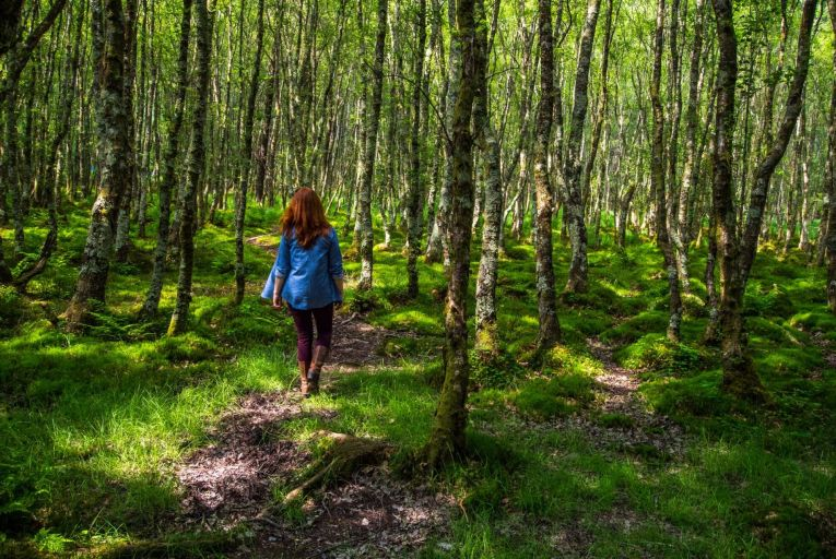 Bank of Ireland launches scheme for companies to plant forests and offset carbon