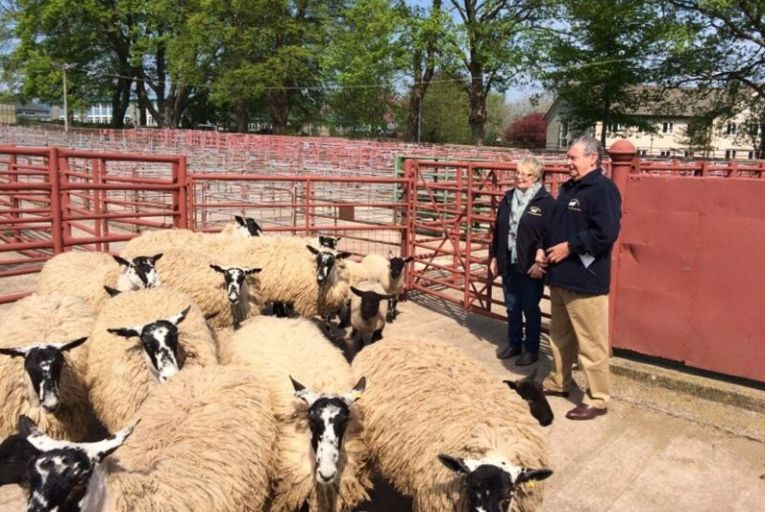 Vincent Pierce, far right, owner of Sheepwool Insulation Ltd which uses wool to create eco-friendly home insulation