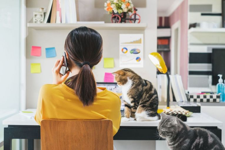 'Pawternity leave' and DNA testing among perks offered to employees during pandemic