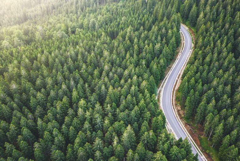 New rules resulted in a summer slowdown at the Department of Agriculture when it came to forestry licences, a senior official will say today. Picture: Getty