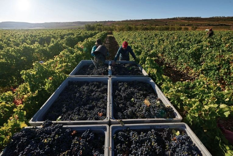 Harvest time in the Rioja region of Spain which has held onto a place inwine lovers' hearts