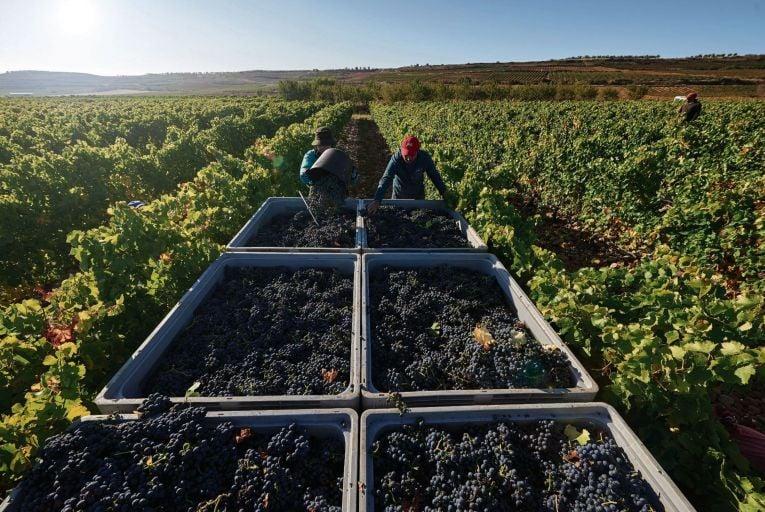 Wine: Ten classic wine regions for your next comfort sip