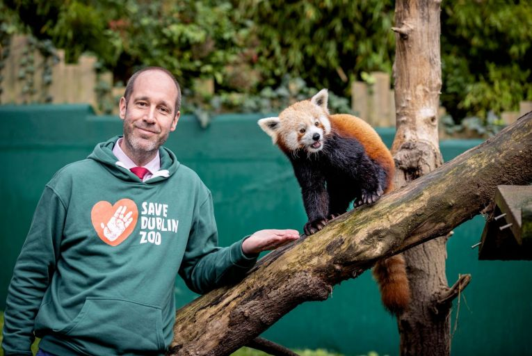 Dr Christoph Schwitzer, director of Dublin Zoo, pictured with the Jinpa the Red Panda. Picture: Marc O'Sullivan
