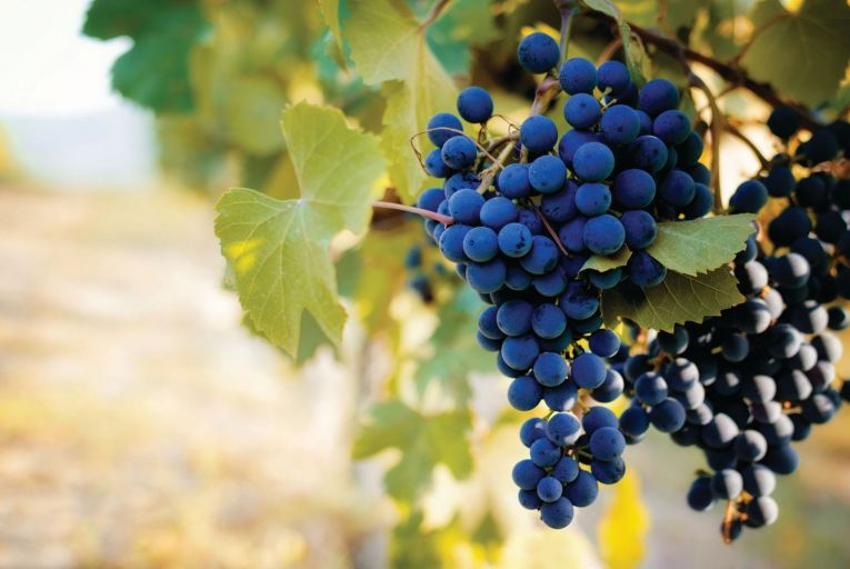Piemonte is the home of the broody and regal nebbiolo grape and the juicy and bright barbera and dolcetto