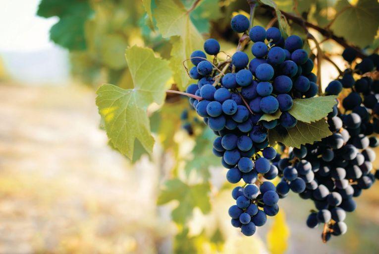Wine: Bet on Barolo and Barbaresco this autumn