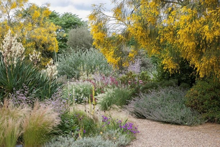 Form,  function, unexpected pops of colour and scent at Beth Chatto's inspiring dry garden in Essex