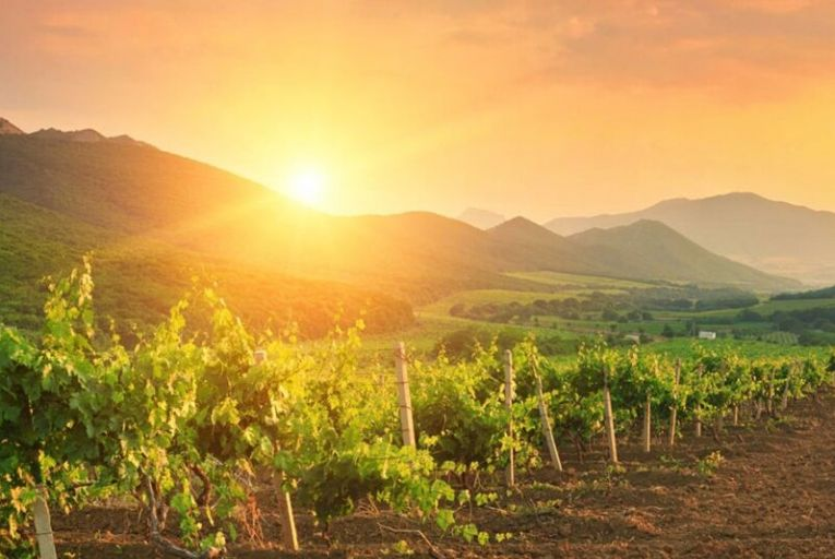 Vineyards in the Beqaa Valley where many famous Lebanese wine producers are located