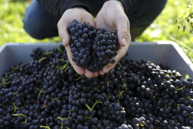 International Pinot Noir Day takes place on August 18. While there's more than a whiff of marketing around these events, they are not necessarily a bad idea. Picture: Bloomberg