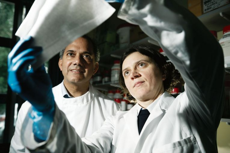 'Living Velcro' used to trap viruses