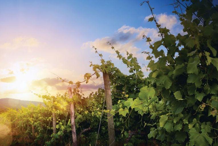 Wine: Tradition meets innovation in Rioja