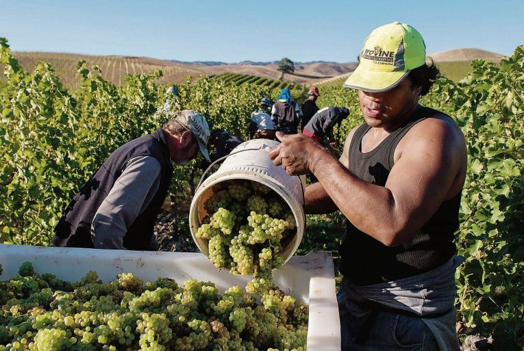 Last year's growing season in Marlborough was particularly good, with drier and hotter weather than usual