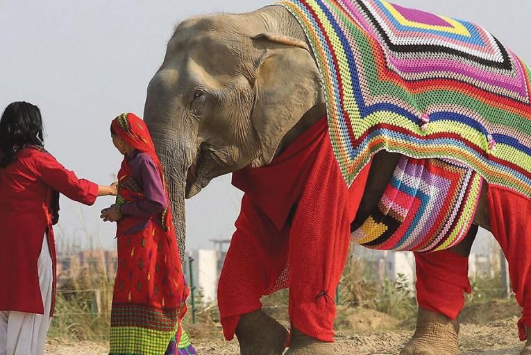 It takes the residents of Mathura in India four weeks to knit an elephant geansaí Pic: Roger Allen