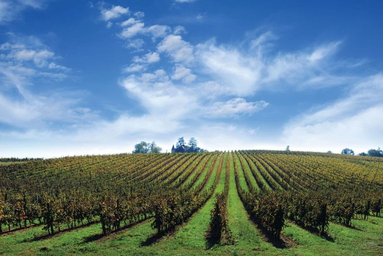 In Bordeaux, many producers are content to plough their own furrow towards success