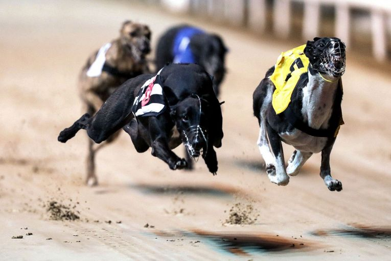 Greyhound Racing Ireland has been frustrated by the lack of coverage of the sport by RTÉ and the removal of greyhound racing from Fáilte Ireland's promotions. Picture: Inpho/Laszlo Geczo
