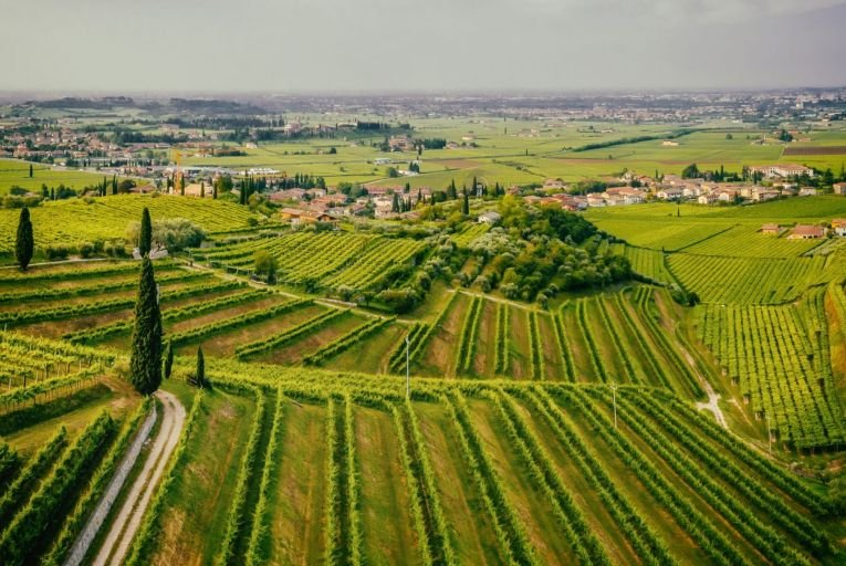 The vineyards of Valpolicella: its product is seeing a significant resurgence in popularity