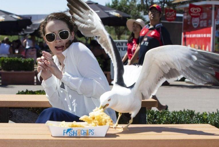 Seagulls deserve our respect
