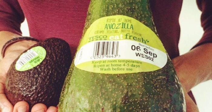 Avozilla: Five Times The Size of A Regular Avocado, Now